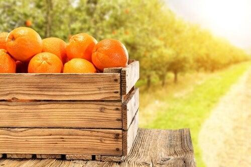 오렌지 주스는 최선의 선택권이다