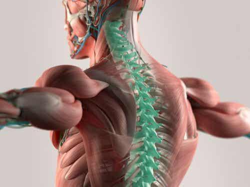 마이크로파이버는 척수 복원에 도움이 될 수 있다