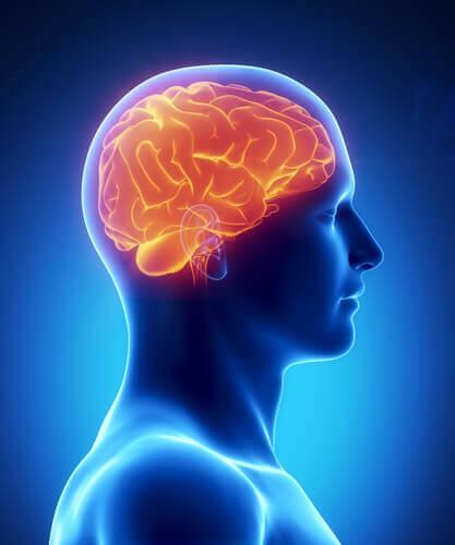 건강한 두뇌를 위해 섭취해야 할 8가지 식품