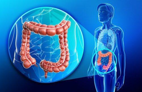 장 건강과 갑상선의 관계