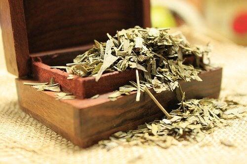1. 이명을 완화하는 은행나무잎