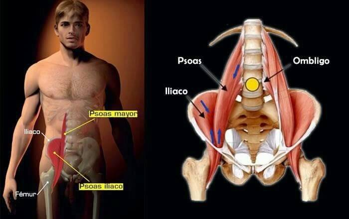 마음의 근육, 대요근은 어떤 근육일까?
