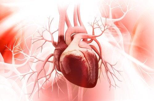 수박씨의 이점 - 3. 심혈관 건강을 개선한다