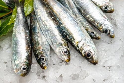 종종 섭취해야 하는 지방 연소 식품 9가지 생선