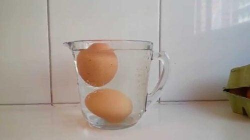 계란을 물에 떨어뜨려보자