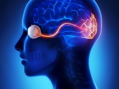 36세까지 뇌의 한 부분은 다 자라지 않는다