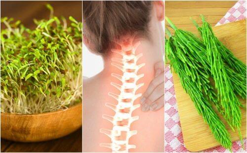 뼈 건강을 개선하는 7가지 약용 식물