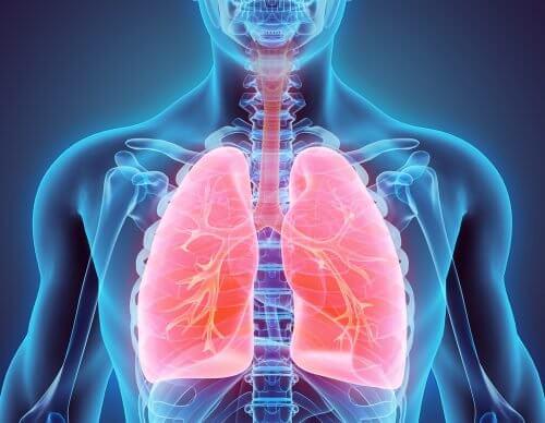 금연을 실천하고 폐를 정화하는 방법