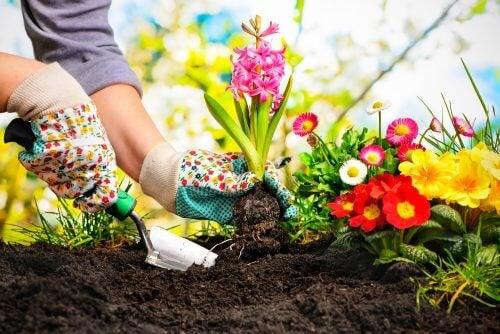 집에서 미니 정원을 가꾸는 아름다운 아이디어 5가지