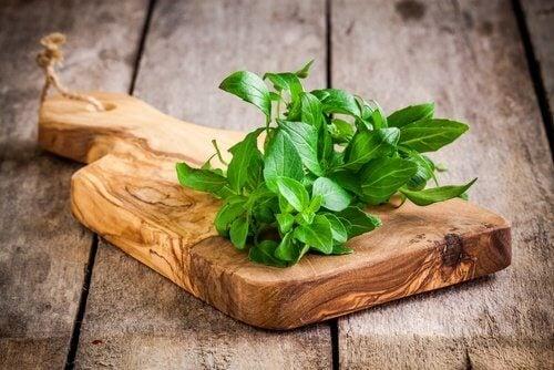 뼈 건강을 개선하는 약용 식물 - 1. 바질
