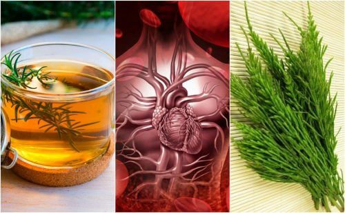 5가지 약초 요법으로 혈액순환을 개선하는 방법