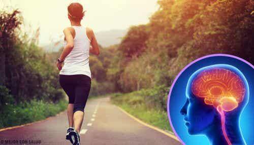운동하지 않으면 뇌에 변화가 생긴다