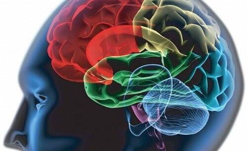 체내 독소 뇌 활동