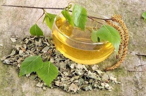 방광염을 치료하는 5가지 천연 차 자작나무 차