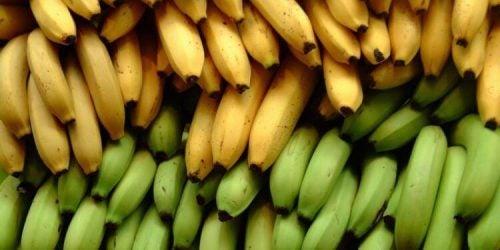 바나나와 플랜테인의 영양상 차이점 3가지