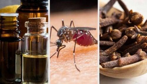 모기를 쫓아내는 10가지 아로마