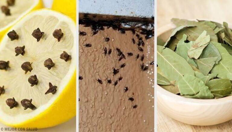 곤충을 없애는 자연 요법