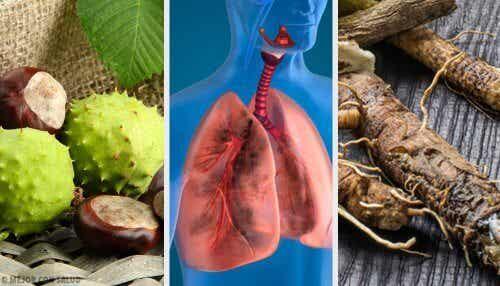 폐를 튼튼하게 하는 데 도움이 되는 4가지 가정 요법