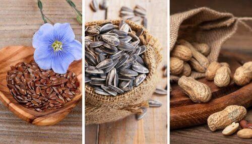 식용 씨앗 5가지와 그 놀라운 특성