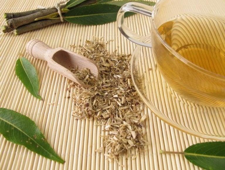 관절염 치료를 위한 5가지 약초 요법 흰버드나무 껍질