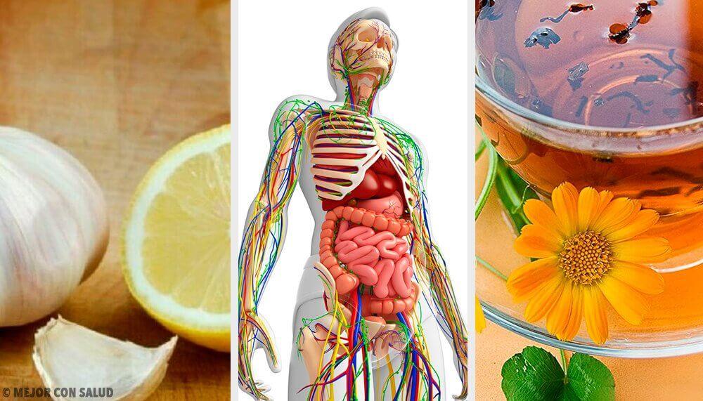 효과적으로 림프계를 해독하는 6가지 자연 요법