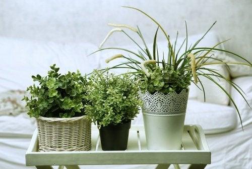 정원에서 쉽게 키울 수 있는 10가지 식물 화분