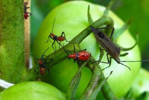 해충을 몰살시키는 자연 방충제 5가지