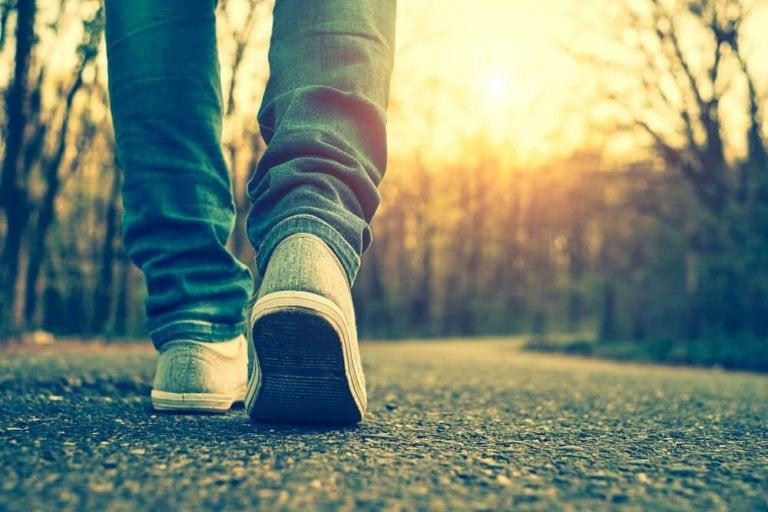 매일 산책을 하면 얻을 수 있는 엄청난 이점