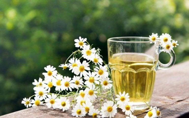 쉽고 유용한 카모마일 자연 치료법