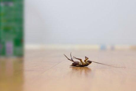 살충제를 사용하지 않고 바퀴벌레를 쫓는 방법