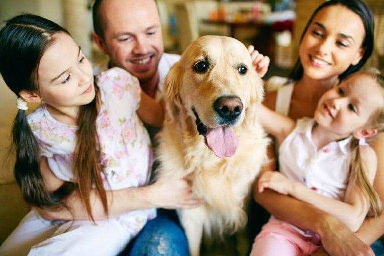 반려동물이 우리 가족에게 미치는 좋은 영향