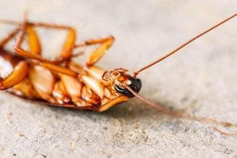 살충제를 사용하지 않고 바퀴벌레를 쫓는 4가지 비결 규조토