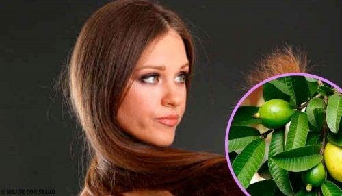 손상된 머릿결을 복구하는 구아바 잎