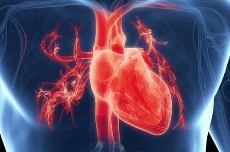 과로가 심장 건강에 미치는 영향