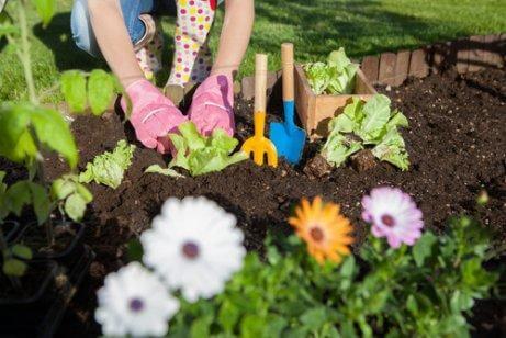 정원에서 식초를 사용하는 7가지 방법