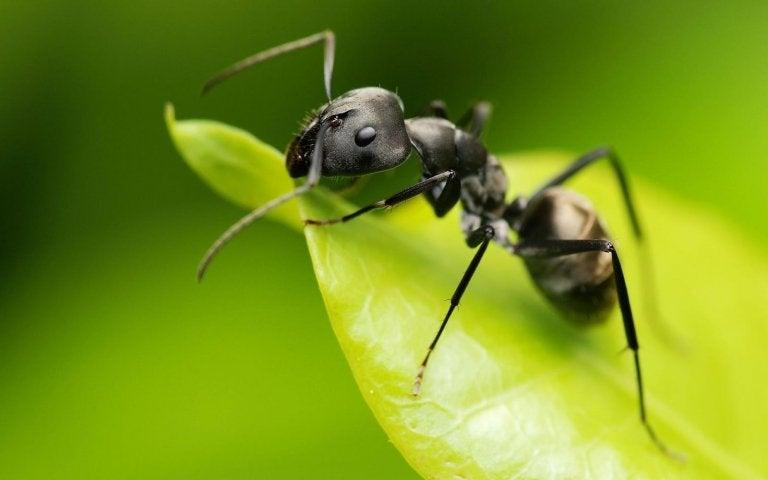 개미 방충제 정원에서 식초를 사용하는 7가지 방법