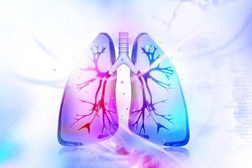폐를 해독하는 자연 요법을 시도해 보자