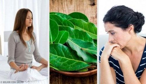 월계수 잎 속에 숨은 다양한 건강 효능