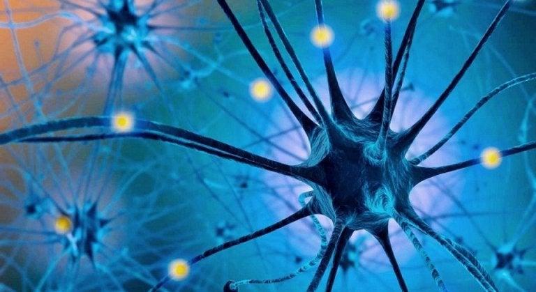세로토닌 식이 요법과 그 효능을 알아보자