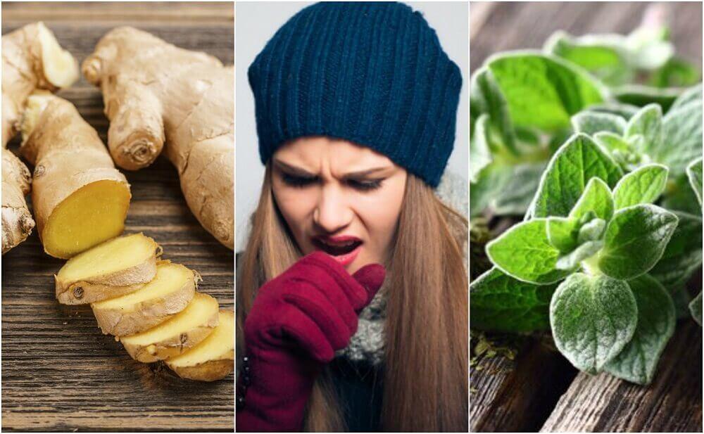 담 제거에 효과적인 5가지 식물 치유법