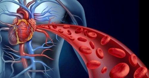 혈액순환을 촉진하는 5가지 운동