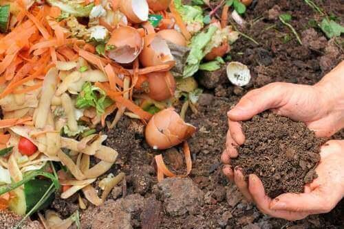 식물용 천연 퇴비를 만드는 5가지 방법