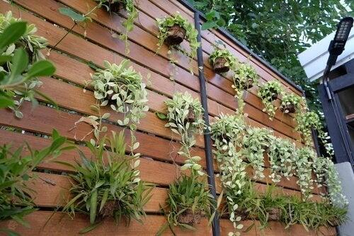수직 정원을 만들어 평범한 벽을 탈바꿈하는 4가지 아이디어