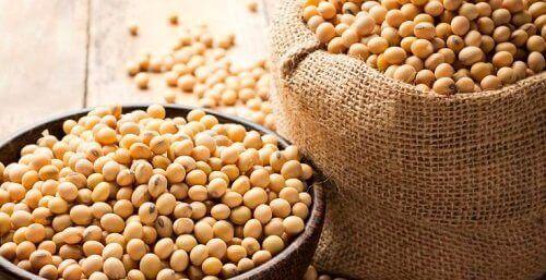 단백질이 풍부한 콩류