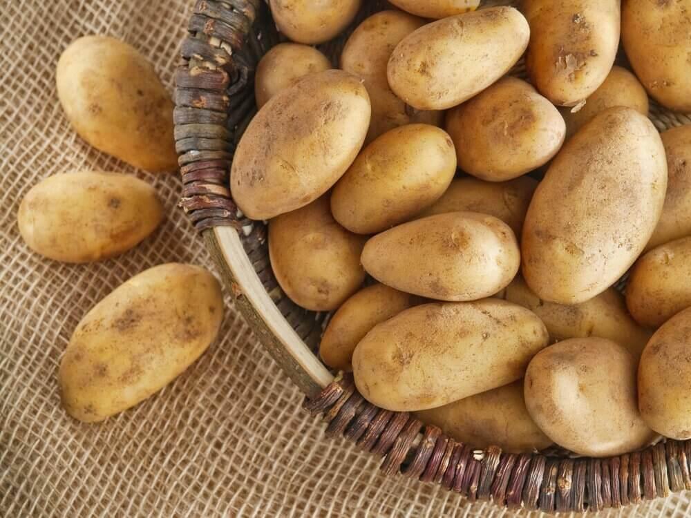 건강을 해치지 않고 체중을 늘리는 비법 감자