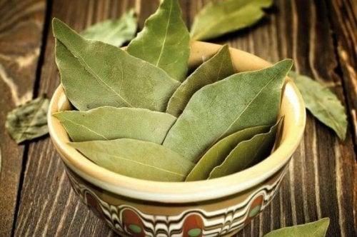 당뇨 치료를 돕는 월계수 잎 활용법