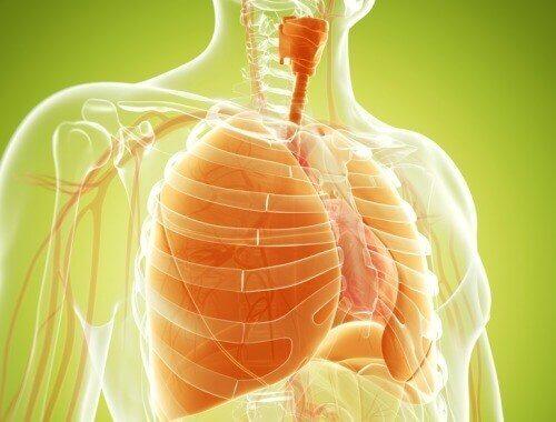폐를 정화하는 자연 요법