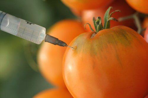 유전자 변형 작물은 발암 식품에 포함될까?
