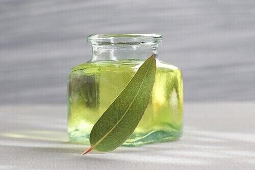 민트는 코골이를 해소하는 데 강력히 권장되는 약용 식물이다.
