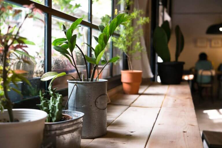 집 안에서 식물을 기르면 왜 건강에 좋을까?